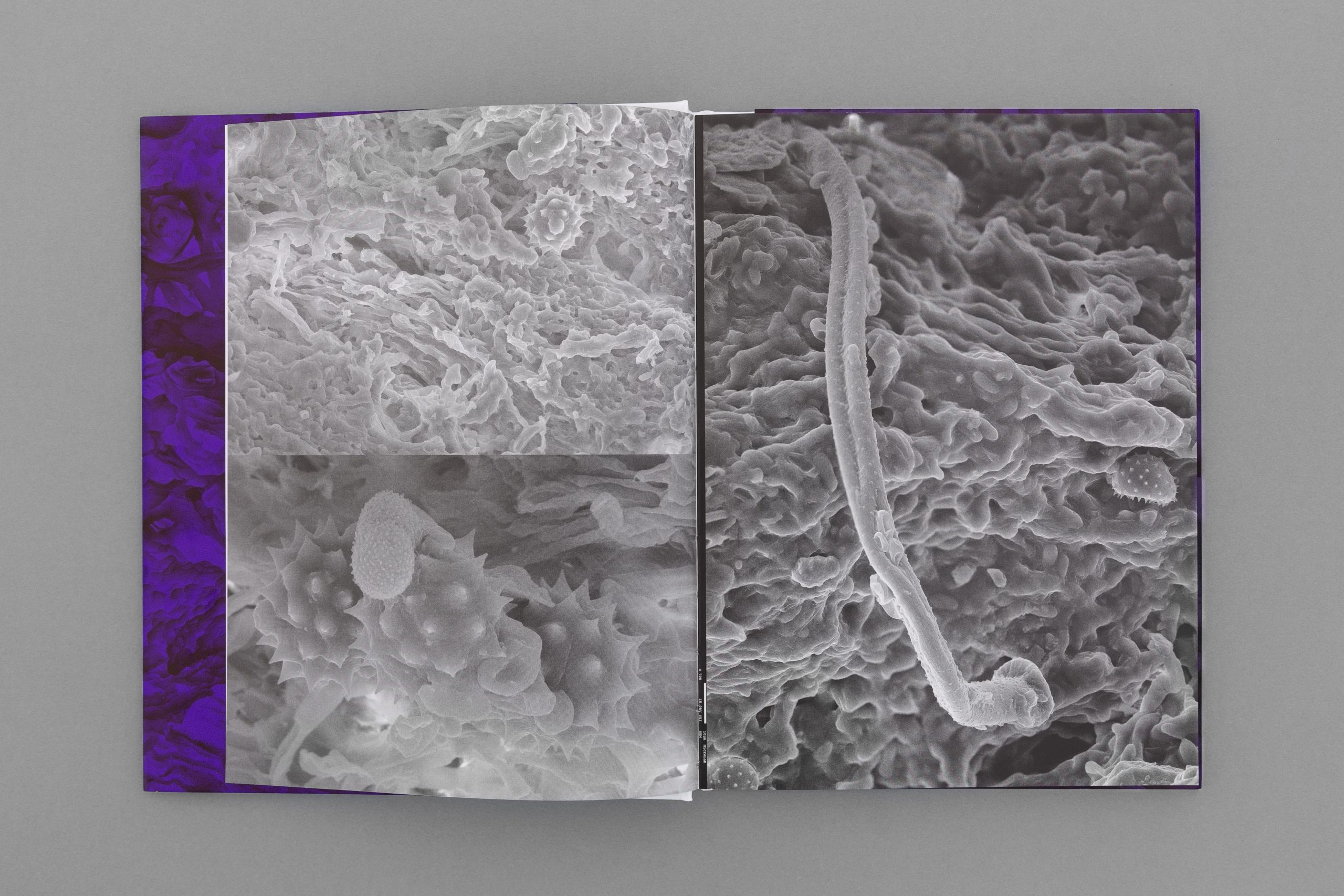 João M. Machado – Diana Policarpo – Nets of Hyphae (3 of 15)
